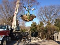 Image Large Tree Transplanting Projects